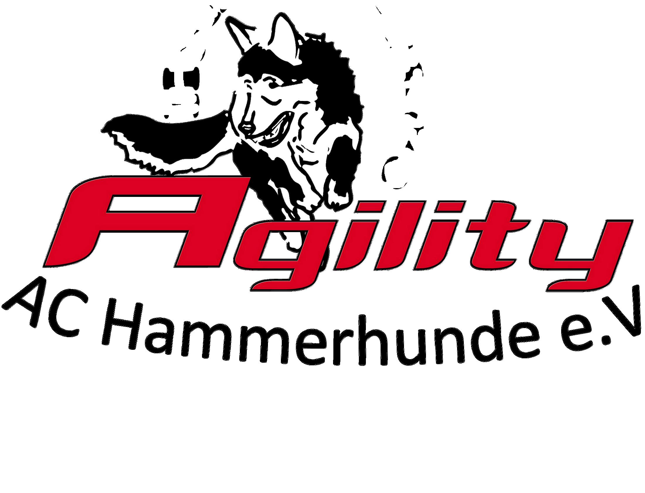 Hammer Agility-Masters